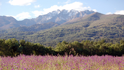 Valle del Tiétar en primavera